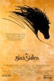 The Black Stallion DVD Release Date