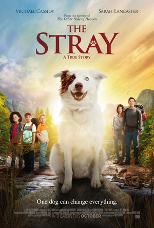 The Stray (2017) DVD Release Date